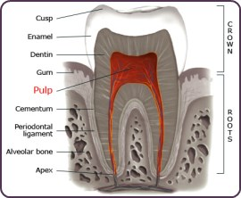 Will Having A Root Canal Mean That My Teeth Will Be Perfectly Healthy Afterwards?